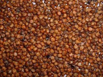 Семена сорго веничное КАРЛИКОВОЕ 54 элита