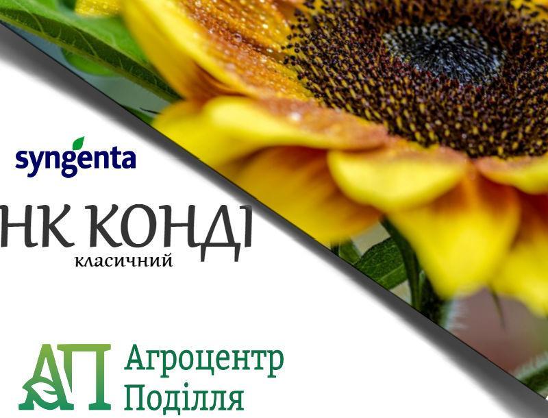 Семена подсолнечника НК КОНДИ (NK KONDI)