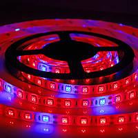 Светодиодная фитолента 14Вт/метр, 5 красных 1 синий, SMD 5050 (60 LED/m) IP65 12V/12В.