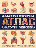 Большой иллюстрированный атлас анатомии человека, фото 1