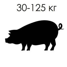 Кормушки для откорма 30-125 кг