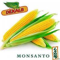 Семена кукурузы ДКС3511 (Монсанто)