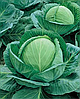 Семена капусты б/к Супер Казачок F1 2500 семян Nasko