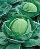 Семена капусты б/к Супер Казачок F1 10 000 семян Nasko