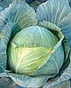 Семена капусты б/к Пэрлына F1 10 000 семян Nasko