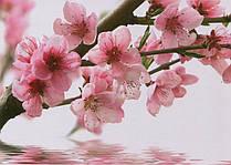 Фотообои Ветка вишни №25 Ветка вишни 272*196 (8л)
