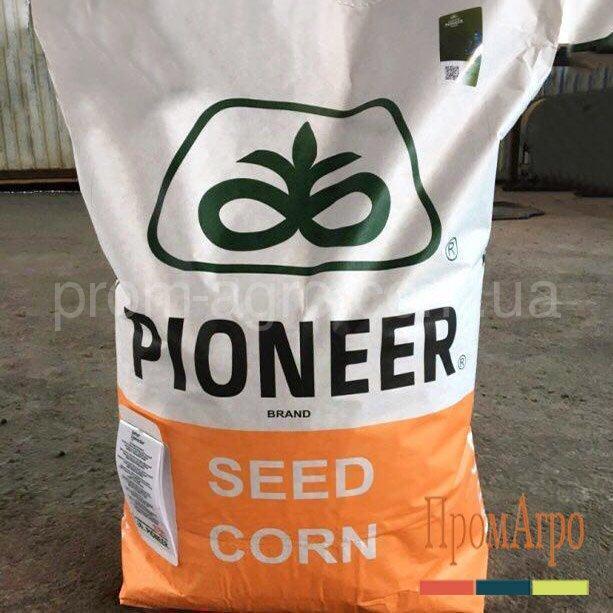 Семена кукурузы Pioneer P9606 ФАО 380 посевной гибрид кукурудзи Пионер П9606