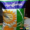 Семена подсолнечника, Syngenta, СИ КАДИКС