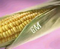 Генетично модифіковані рослини небезпечні