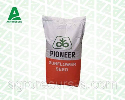 Семена подсолнечника П62ЛЛ109 , Пионер