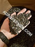 Семена подсолнечника VIKING F 696 канадский трансгенный гибрид.