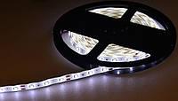 Лента светодиодная 3528 (60 диод./м 4.8w/м) 12V Белый свет(герметичная) Motoko
