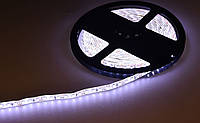 Лента светодиодная 3528 (120 диод./м 9.6w/м) 12V Белый свет(герметичная) Motoko