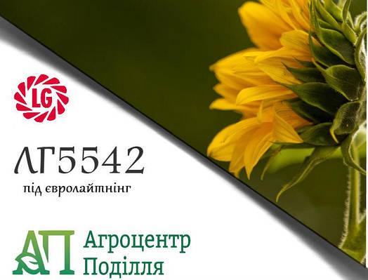 Семена подсолнечника под евролайтинг ЛГ 5542 (устойчив к заразихе A-G) ЛИМАГРЕЙН