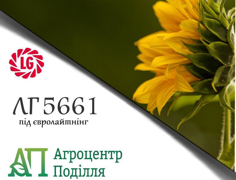 Семена подсолнечника под евролайтинг ЛГ 5661 (устойчив к заразихе A-G) ЛИМАГРЕЙН