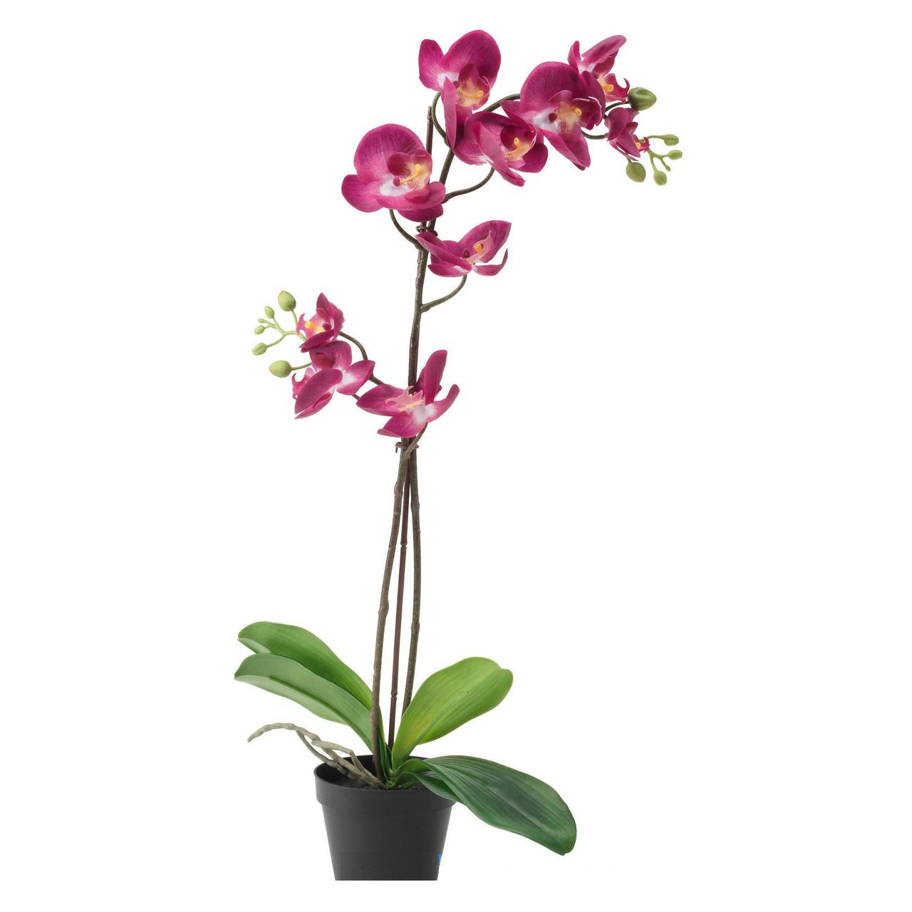 ФЕЙКА, Искусственное растение, фиолетовая, 65 см 50292303, ИКЕА, IKEA, FEJKA