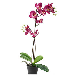 ФЕЙКА, Искусственное растение, фиолетовая, 65 см 50292303, ИКЕА, IKEA, FEJKA, фото 2