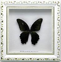 Бабочка в рамке (21х21х4 см)