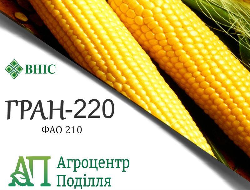 Семена кукурузы под гербициды гибрид ГРАН 220 (ФАО 210) ВНИС