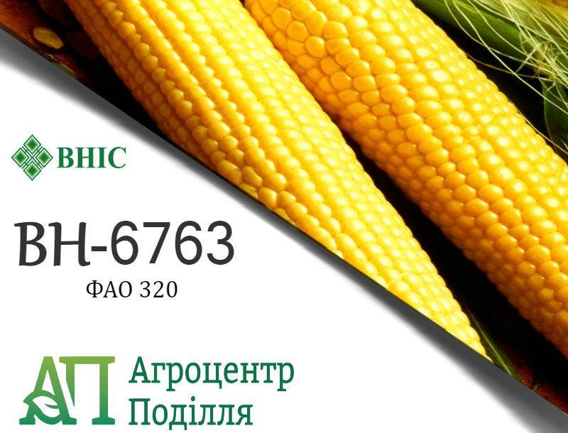 Семена кукурузы ВН 6763 (ФАО 320) ВНИС (бесплатная доставка)