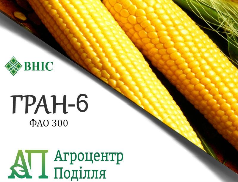 Семена кукурузы ГРАН 6 (ФАО 300) ВНИС