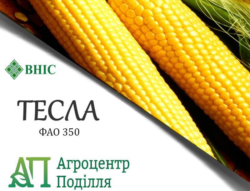 Семена кукурузы ТЕСЛА (ФАО 350) ВНИС (бесплатная доставка)