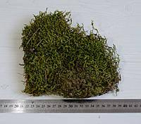 Натуральный лесной мох зеленый пластинами