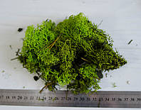 Исландский мох салатовый - стабилизирован