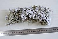 Мох сушеный серый в снегу 20 г, фото 1