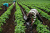 """Капельный полив набор """"Садовод - 100"""", капельный полив для большого урожая, фото 2"""