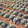 Капельный полив, набор  Садовод -150 комплект капельного орошения для увеличения урожая, фото 4
