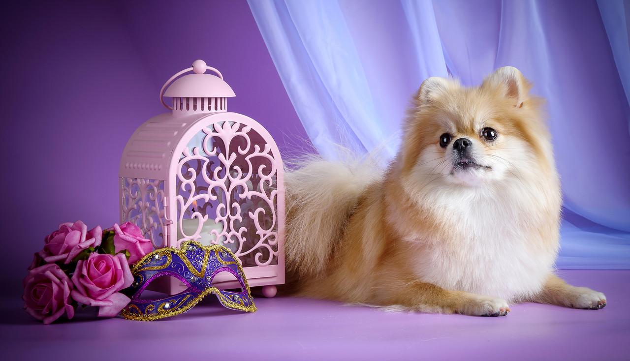 """Картина на стекле """"Собачка и розы"""""""