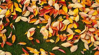 Осенние удобрения