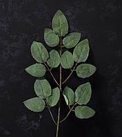 Лист троянди сіро-зелений, фото 1
