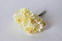 Цветы хризантемы (астры) 6 шт. диаметр 3,5-4 см кремового цвета, фото 1