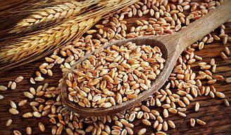 """Спельта органічна для виготовлення борошна та крупи (мішок 25 кг.) торгова марка """"Борошно і Хліб""""."""