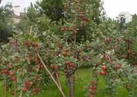 Защита садовых растений Киев и Киевская область