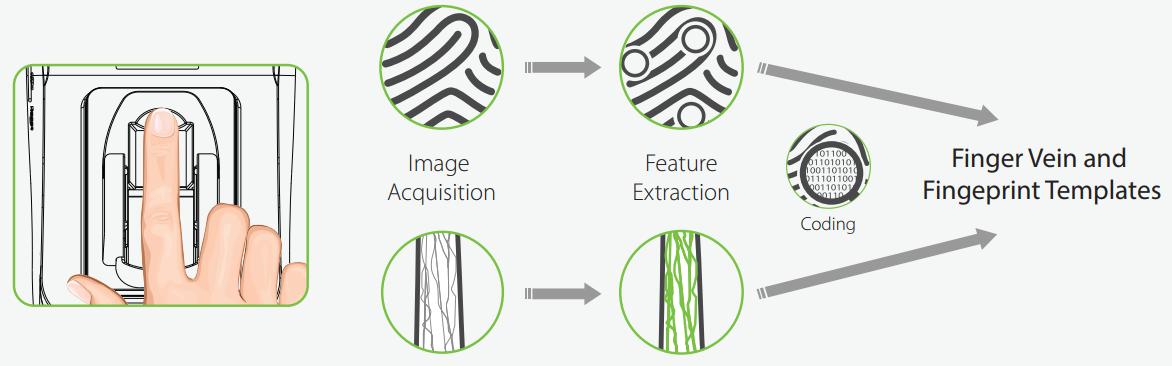 Технология распознавания сосудов вен и отпечатков ZKTeco