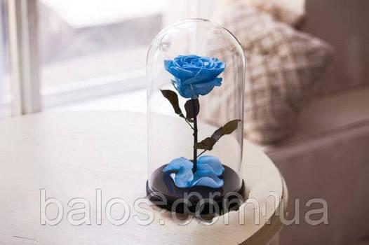Живая вечная роза в стеклянной колбе Синий сапфир