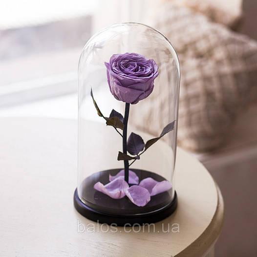 Живая вечная роза в стеклянной колбе Фиолетовый аметист
