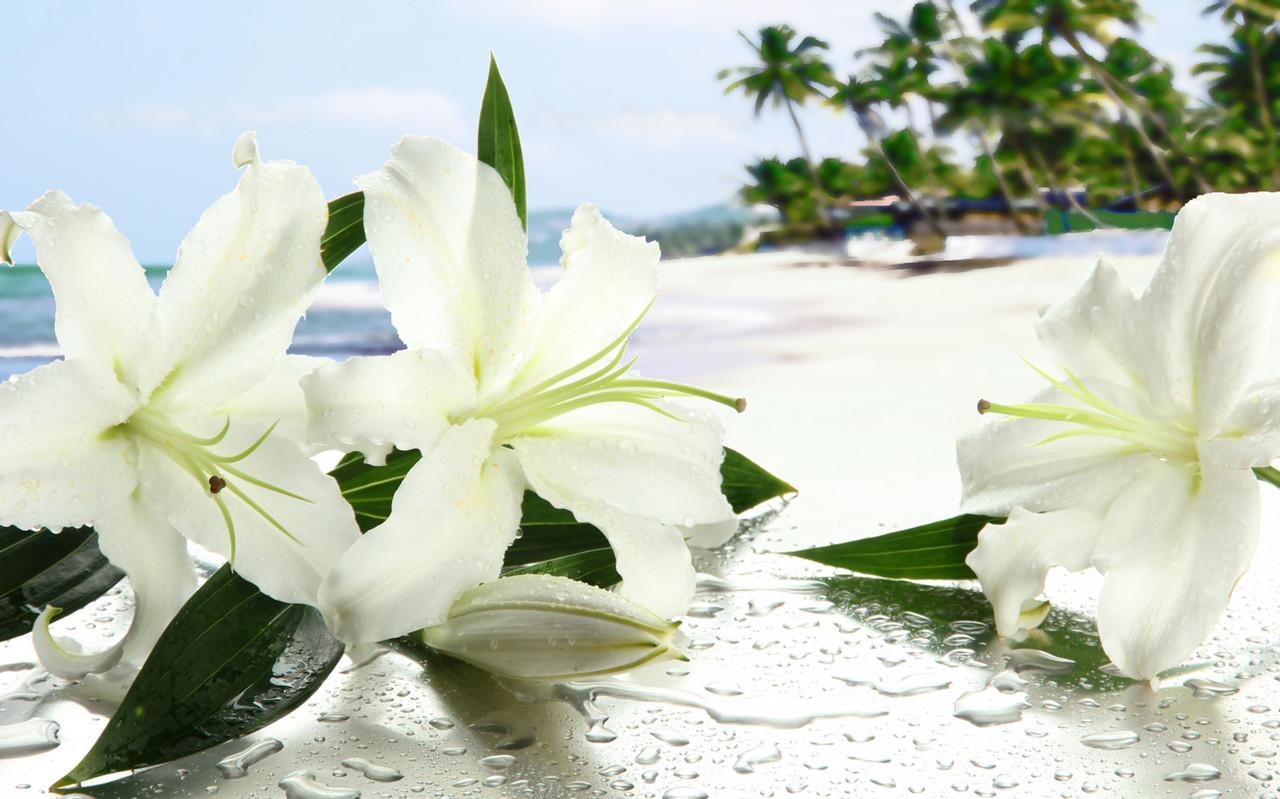 """Картина на стекле """"Цветы на пляже"""""""