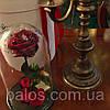Живая вечная роза в стеклянной колбе, разные цвета