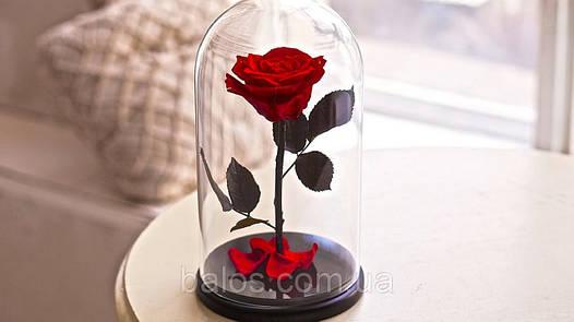 Живая вечная роза в стеклянной колбе