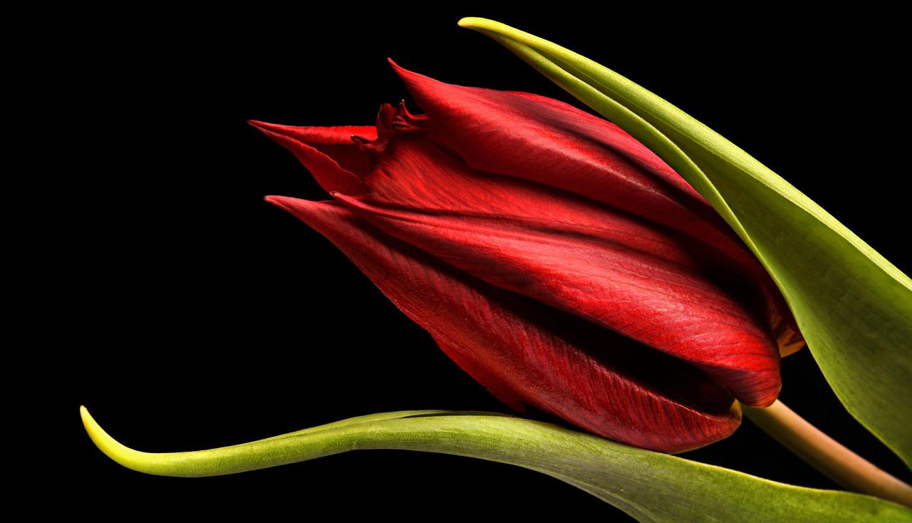 """Картина на стекле """"Красные тюльпаны"""""""