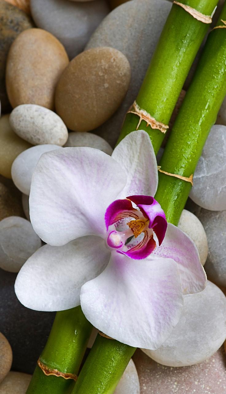"""Картина на стекле """"Орхидея, бамбук и камни"""""""