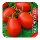 Семена томата Наско 245 sl F1 250 семян Nasko