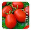 Семена томата Наско 245 sl F1 1000 семян Nasko