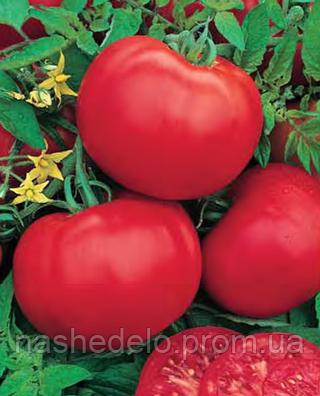 Семена томата Лира F1 500 семян Nasko