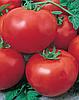 Семена томата Муза F1 1000 семян Nasko