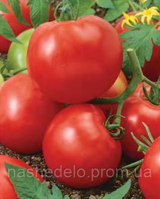 Семена томата Яна 500 грамм Nasko